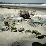 Śmieci – plaga, która niszczy świat